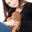 Young girl with puply of Dogue de Bordeaux (French mastiff) — Stock Photo