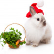 White rabbit and basket with parsley and carrot - Stock Photo