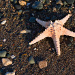 The starfish on a beach — Stock Photo