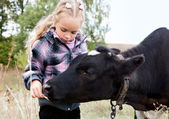 A girl feeds the cow — Stock Photo