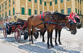 Horse-driven carriage at Schonbrunn — Stock Photo