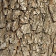 Tree bark texture — Stock Photo #3560107