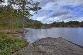Norwegian woods — Stock Photo