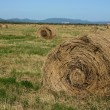 Stock Photo: Haymaking