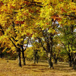 Stock Photo: Gold of autumn
