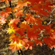 Stock Photo: Autumn in red