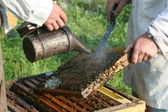 Bee-keepers are working with honeycombs — Stockfoto