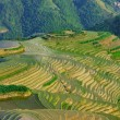 Rice terraces Longji (dragon ridge) — Stock Photo #2925040