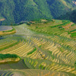 Rice terraces Longji (dragon ridge) — Stock Photo