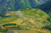 Rice terraces Longji (dragon ridge) — Stock fotografie