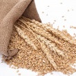 The scattered bag with wheat of a grain - Stock Photo