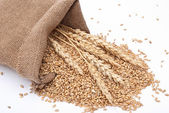 The scattered bag with wheat of a grain — Stock Photo