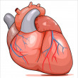Human Heart - Imagen vectorial