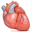 Human Heart -  