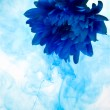 Blue chrysanthemum flower — Stock Photo #3153590