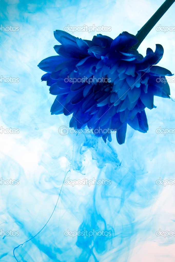 Abstract chrysanthemum flower on a white background with blue smoke — Stock Photo #3153590