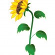 Royalty-Free Stock Vector Image: Sunflower