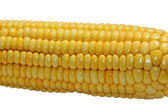 Cob of the corn — Stock Photo