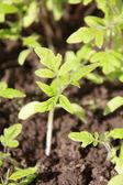 Plante — Photo