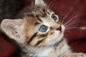 Nieuwsgierig kitten — Stockfoto