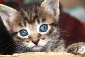 Meraklı kedi — Stok fotoğraf