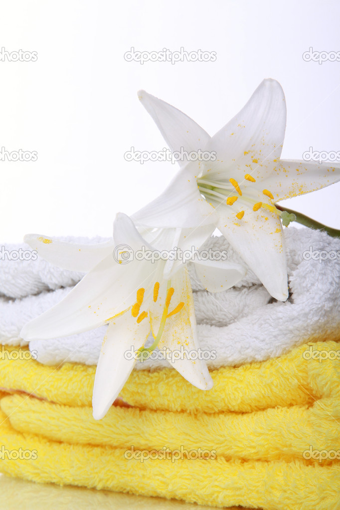 Lilly on yellow terry towels — Stock Photo #3375028