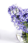 Delicate blue flowers — Stock Photo