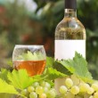 White wine and grapes composition — Stock Photo