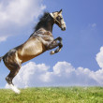 Horse — Stock Photo #3880466