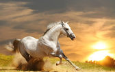 White stallion — Stock Photo