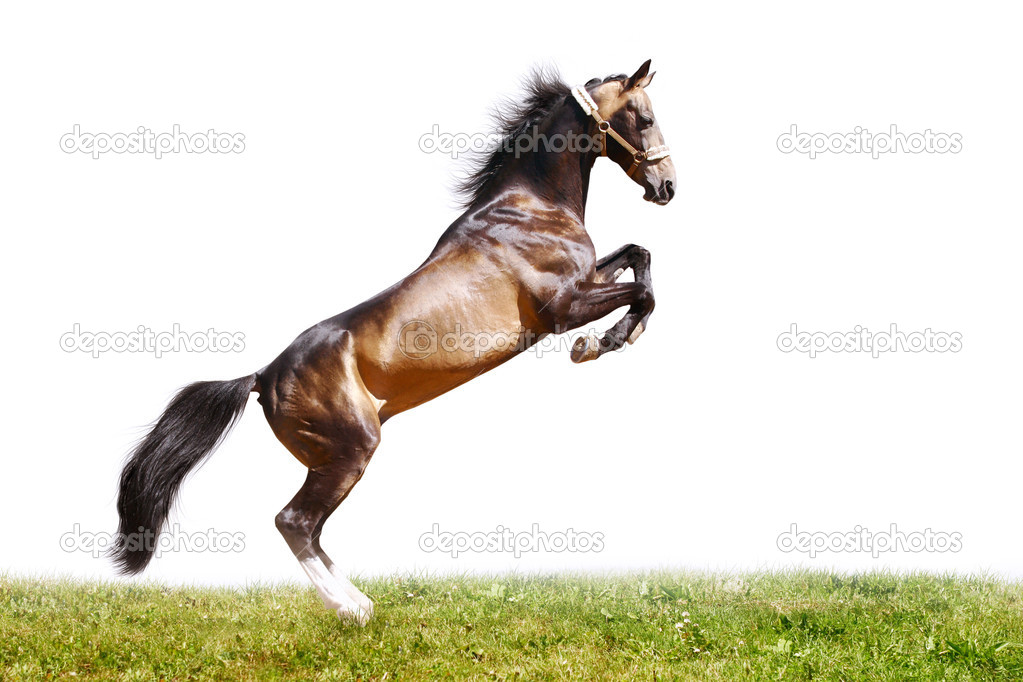 Horse jumping isolated — Stock Photo #3880476