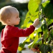 Young baby in a park — Stock Photo #3120120