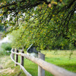 Countryside view with a fence and a tree - Stock Photo