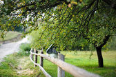 Countryside view with a fence and a tree — Stock Photo