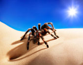 Spider on body — Stock Photo