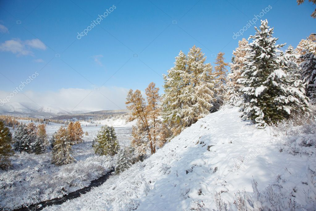 View on Altai mountines and forest under snow — Stock Photo #4288641