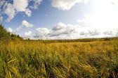 Fisheye landscape — Stock Photo