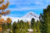 Herbst berg — Stockfoto