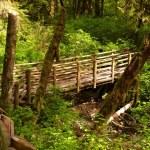 Bridge over the Creek — Stock Photo