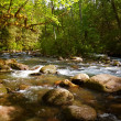 Forest Creek — Stock Photo #2735168