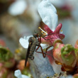 Macro of Fly on the Flower — Stock Photo