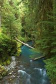 Forest Creek — Stock Photo