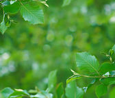 Branches — Stock Photo
