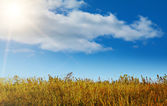 Autumn landscape in good warm weather — Stock Photo