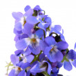 Stock Photo: Flowers violets