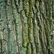 Royalty-Free Stock Photo: Bark Texture