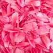 Flower petals - Stock fotografie