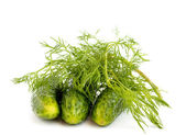 Fennel, cucumbers — Stock Photo