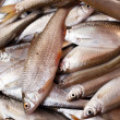 Fresh fish - Foto Stock