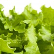 Salad leaves — Stock Photo #3381179